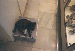cat in a shop in barcelona